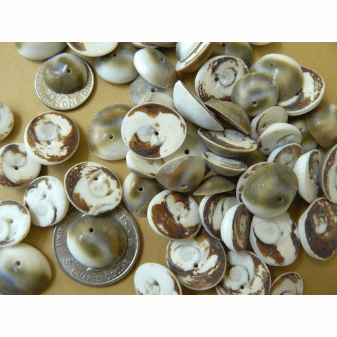 160 Gram Package of Drilled Sea Shells Shiva shell beads