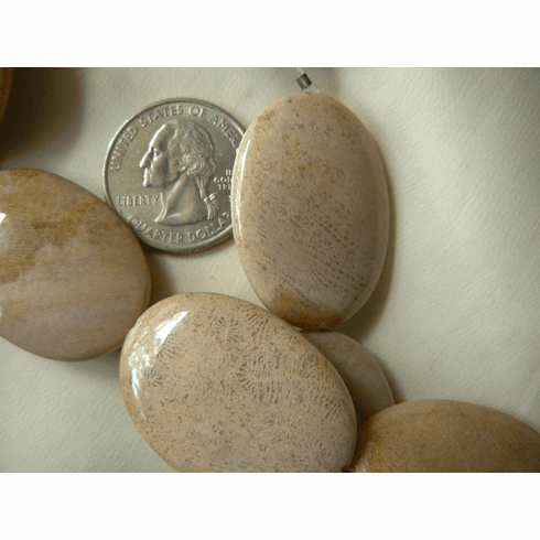 Agatized Fossilized Coral Beads Large Ovals 35x25mm 12 beads