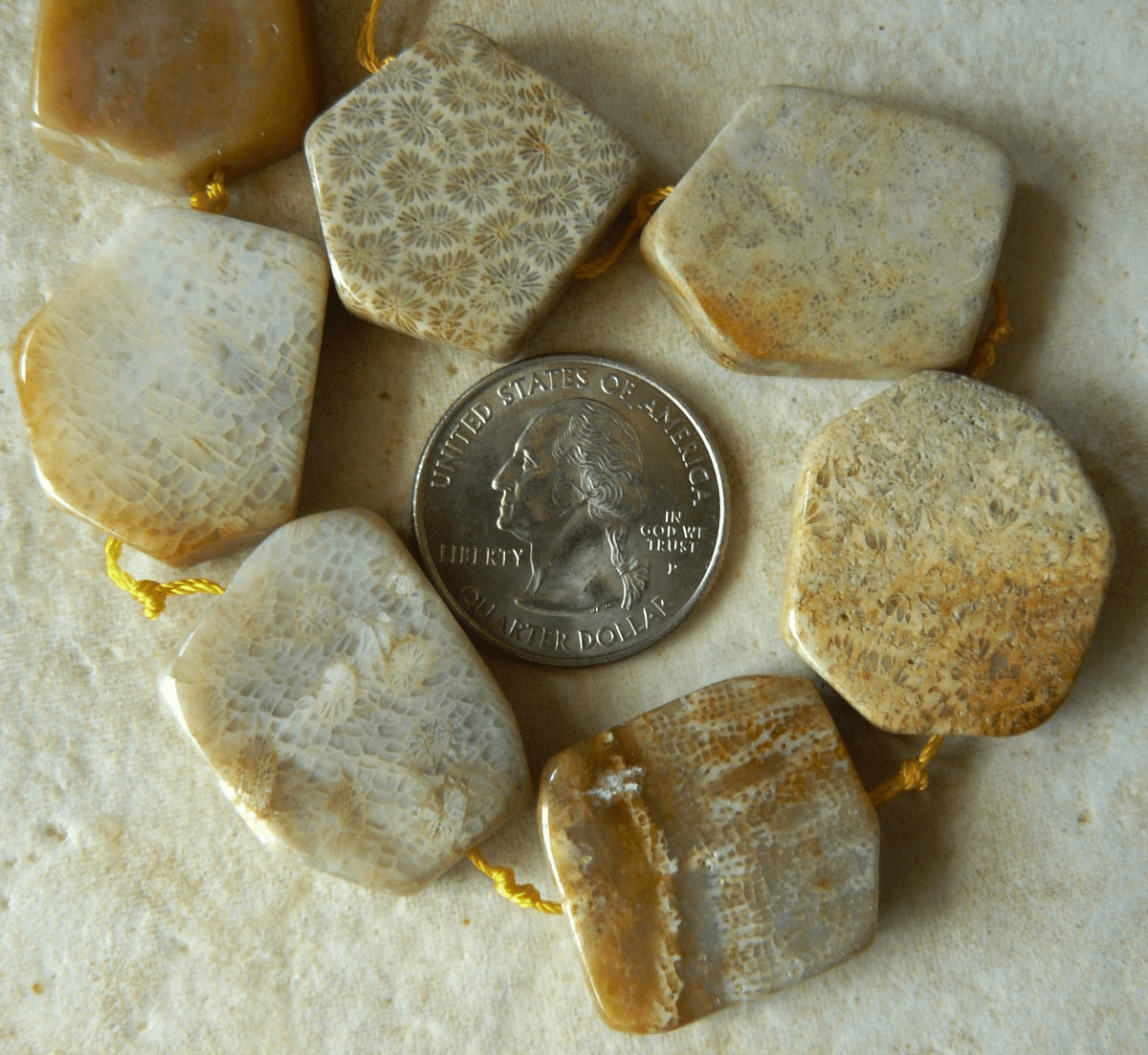 Agatized Fossilized Coral Free-form flat beads around 25mm