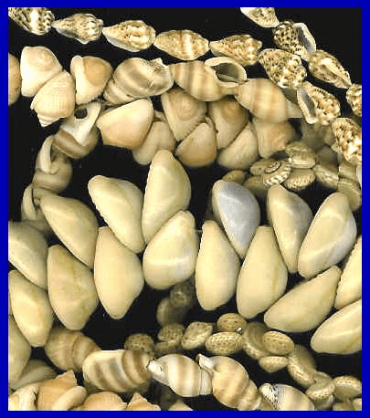 Assorted Sea Shell Beads