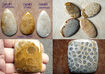 Fossil Coral Cabochons With detailed fossil paterns