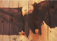 Eagle Indoor Outdoor Wall Art - Large