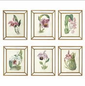 Tozai Home Orchidees Set of 6 Orchid Wall Art