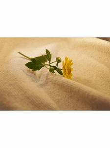 8 yards Natural Pure Cotton Knit Fabric