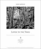 Forest in Spring: Listen to the Trees Poster