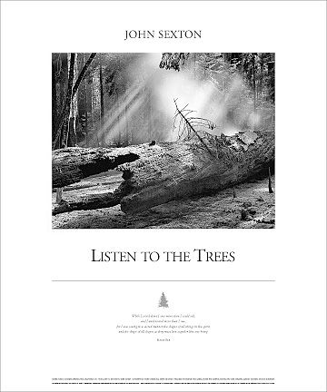 Mythic Forest: Listen to the Trees Poster