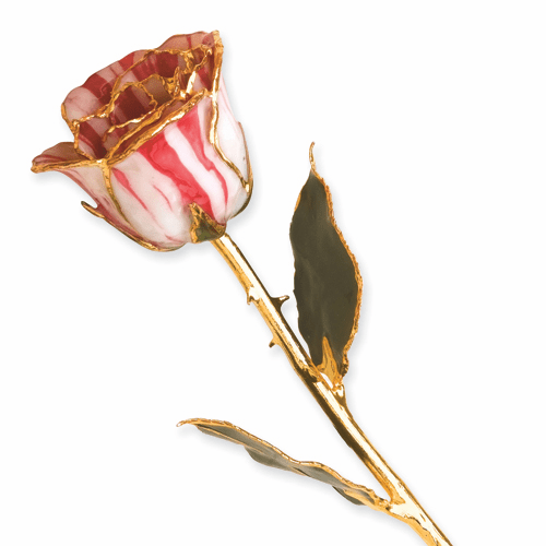 Lacquer Dipped Gold Trim Peppermint Rose