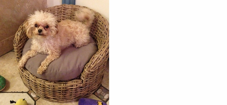 10 Super Cute Dogs In Wicker Furniture Pictures