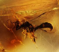 Amber Reveals Prehistoric Times and Science of the Future
