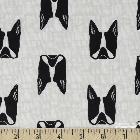 Sarah Golden for Andover, Cats and Dogs, Dogs Black