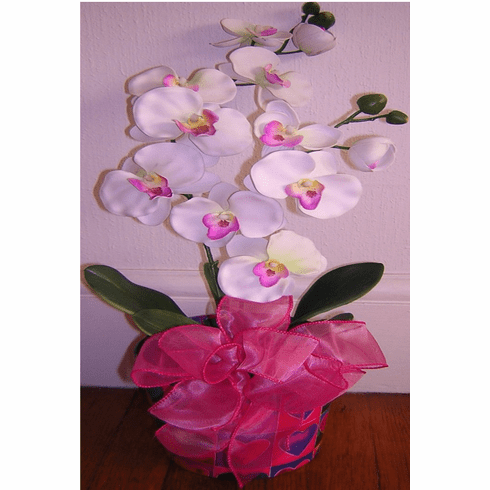 Orchid Plant-Boston Gift Basket