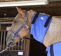 HyperKewl Evaporative Cooling Horse Neck Wrap - Small