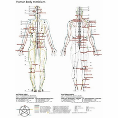 acupuncture human body meridians 8x10 photo