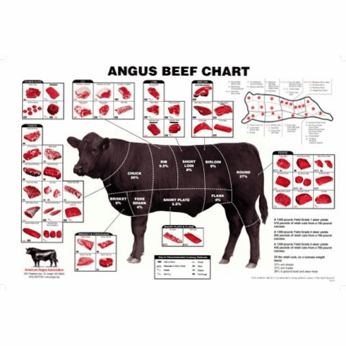Angus Beef Chart Meat Cuts Diagram Poster 24x36