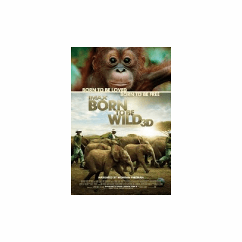 Born To Be Wild 8x10 photo Master Print