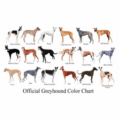 Dogs Greyhound Color Chart poster 24inx36in Poster