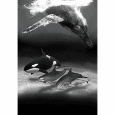 """Dolphins And Whales Black and White Poster 24""""x36"""""""
