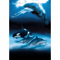 Dolphins And Whales Poster 24x36 art