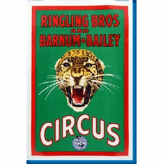 Ringling Bros. Circus Leopard 8x10 photo Master Print