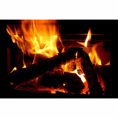 yule log christmas holiday 8x10 photo