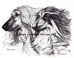 "Afghan Hound  ""Wind Hound Pair""  Limited Edition Print"