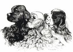 "American Cocker Spaniel ""Three Varieties"" Limited Edition Print"