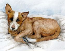 Australian Cattle Dog Limited Edition Print