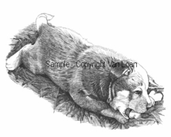 "Australian Cattle Dog ""Puppy With Bone"" Limited Edition Print"