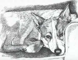 "Australian Cattle Dog ""Red Sleeping"" Limited Edition Print"