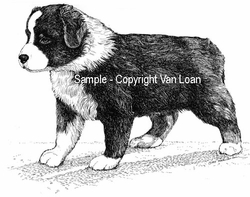 "Australian Shepherd ""Puppy"" Limited Edition Print"