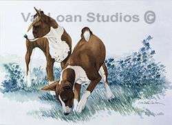 "Basenji ""Sniff"" Limited Edition Print"
