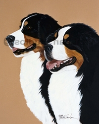 "Bernese Mountain Dog  ""Adult Head Studies"""
