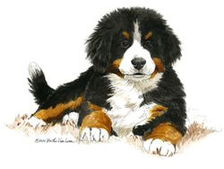 "Bernese Mountain Dog ""Bright Eyes"" Limited Edition Print"