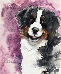 "Bernese Mountain Dog  ""Eyes of Trust"" Limited Edition Print"