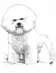 "Bichon Frise ""Sitting"" Limited Edition Print"