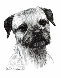 "Border Terrier ""Head Study"" Limited Edition Print"
