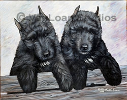 "Bouvier de Flandres ""Puppies"""