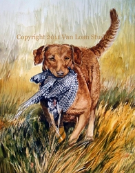 Chesapeake Bay Retriever   With Pheasant