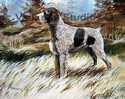 "German Wirehaired Pointer ""In the Field"""