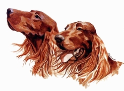 "Irish Setter ""New Print 2011"""