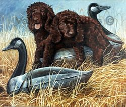 "Irish Water Spaniel ""Pups with Decoy"""