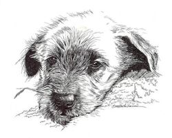 Irish Wolfhound Baby