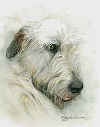 "Irish Wolfhound Watercolor Painting, ""Sleeping On Her Pillow"" SOLD"