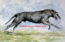 Irish Wolfhound Watercolor Painting