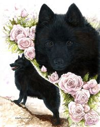 Schipperke with Mauve Roses