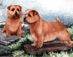 "Norfolk Terrier ""On The Log"""