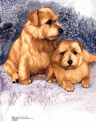 "Norfolk Terrier ""Pair on Blue and Mauve"""