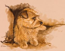 "Norfolk Terrier ""Pup on Couch"""