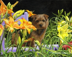 Norfolk Terrier The Blue Chair Limited Edition Print
