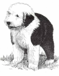 "Old English Sheepdog ""Puppy"""